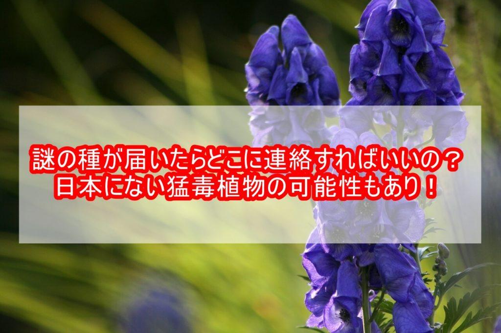 謎の種子中国届いたらどこ連絡正体日本猛毒植物