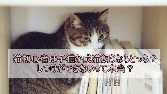 猫初心者は子猫か成猫飼うならどっち?しつけができないって本当?